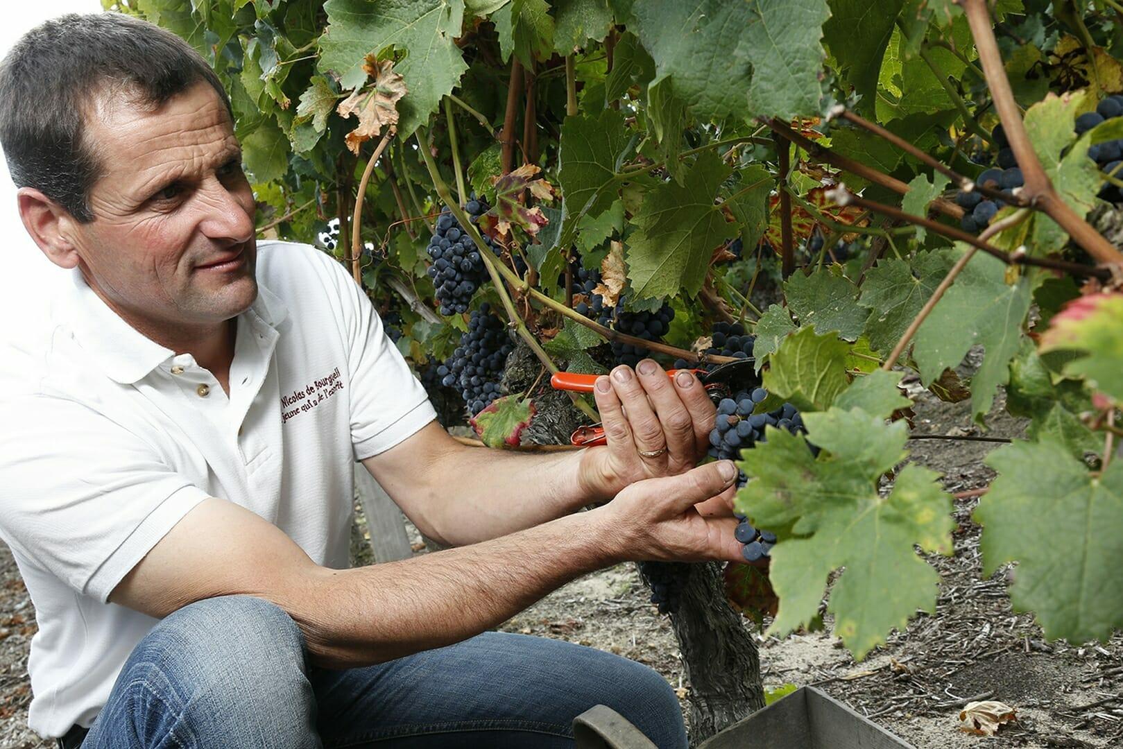 Vignoble de la Mineraie Richard RÉTHORÉ taille de vignes